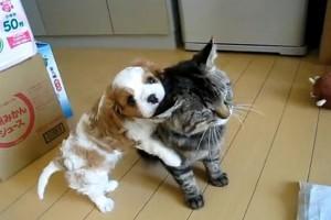 Dog-pets-cat1